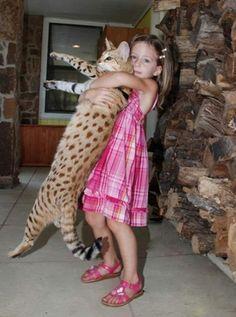 Savannah Cat and kids copii si pisici Loloable Stuff blog Tag